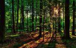 Земли лесного фонда и правовой режим их использования в 2020 году