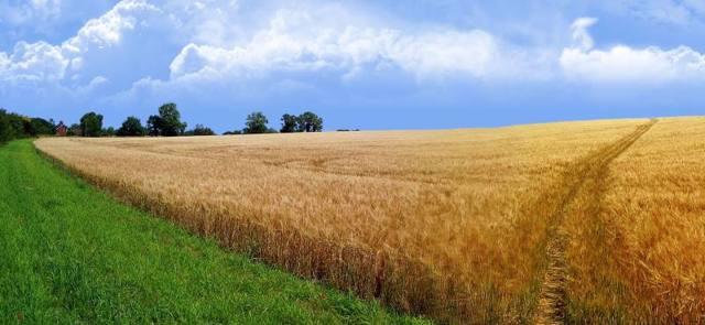 Оспаривание кадастровой стоимости земельного участка в 2020 году