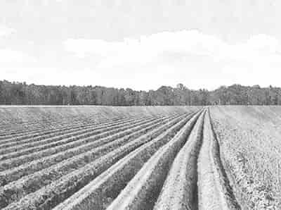 Что такое земельный пай и как его получить в 2020 году