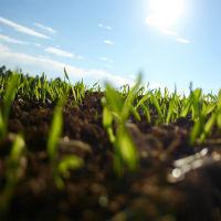 Что такое земельная доля и как ее определить в 2020 году
