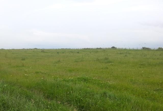 Земельный участок под ижс в 2020 году: порядок использования