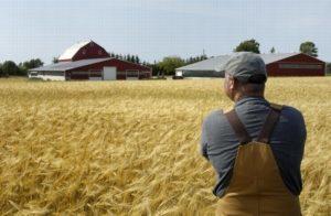 Как получить и оформить земельный пай по наследству