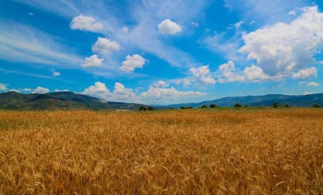 Государственный земельный кадастр РФ и его задачи в 2020 году